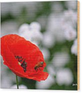 Red Poppy And The Bee Wood Print