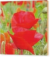 Red Poppy Flowers Art Prints Floral Wood Print