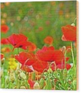 Red Poppy Flowers Meadow Art Prints Wood Print