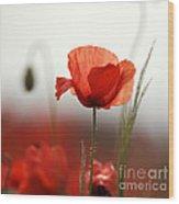 Red Poppy Flowers Wood Print