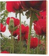 Red Poppy's Wood Print
