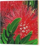 Red Powder Puff Wood Print