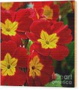 Red Primroses Wood Print