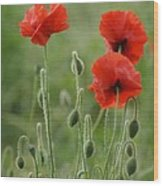 Red Red Poppies 1 Wood Print