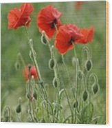 Red Red Poppies 2 Wood Print