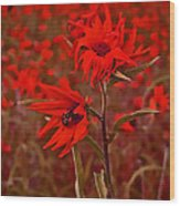 Red Red Wild Flowers Wood Print