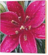 Red Refreshed Lily Wood Print