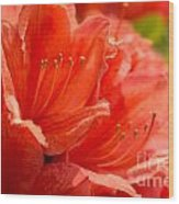 Red Rhodo Wood Print