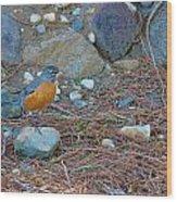 Red Robin Wood Print