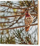 Red Rock Country Hummingbird Wood Print