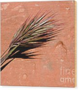 Red Rock In Arizona Wood Print