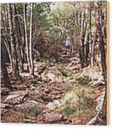 Red Rock Pine Forest Wood Print