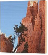 Red Rocks Of Bryce Canyon  Wood Print