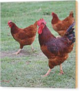 Red Rooster And Hens Wood Print