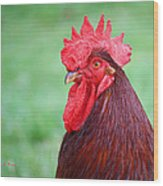 Red Rooster Portrait Wood Print