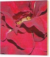 Crimson Blush 1.2 Wood Print