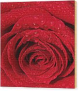 Red Rose And Water Drops Wood Print