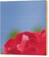 Red Rose Blue Sky Wood Print