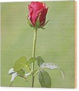 Red Rose Bud 1 Wood Print