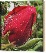 Red Rose Bud With Water Drops Wood Print