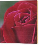 Red Rose Close 1 Wood Print by Roger Snyder