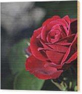 Red Rose Dark Wood Print by Roger Snyder
