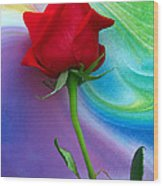 Red Rose Delight Wood Print