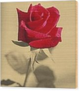 Red Rose Flower Isolated On Sepia Background Wood Print
