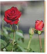 Red Rose Flower Wood Print