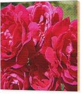 Red Rose Garden Art Prints Roses Wood Print