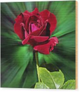 Red Rose Green Background Wood Print