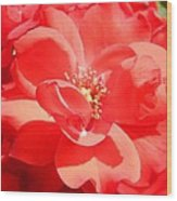 Red Rose In Full Bloom Wood Print