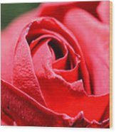 Red Rose Wood Print by Ivelin Donchev