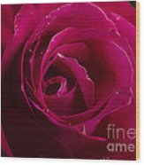 Red Rose Wood Print