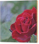 Red Rose Light Wood Print by Roger Snyder