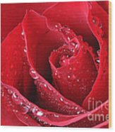 Red Rose Macro With Waterdrops Wood Print