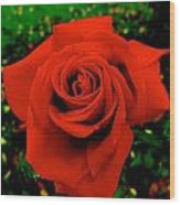 Red Rose On Green Wood Print