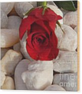 Red Rose On River Rocks Wood Print