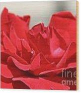 Red Rose Red Rose Wood Print