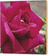 Red Rose Up Close Wood Print