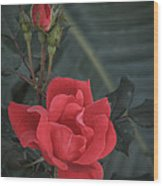 Red Rose With Bud Wood Print