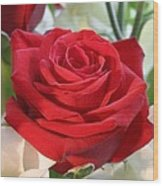 Red Rose With Garden Background  Wood Print
