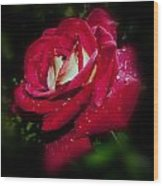 Red Rose With Water Drops Wood Print