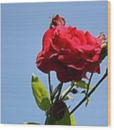 Red Roses With Blue Sky Background Wood Print