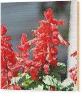 Red Salvia Brush Strokes Wood Print