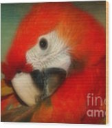 Red Scarlet   Macaw Parrot Sammy Wood Print