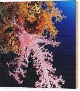 Red Sea Coral Wood Print