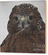 Red Shouldered Hawk Close Up Wood Print