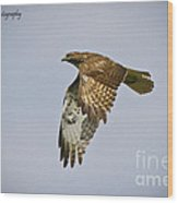 Red-shouldered Hawk Flyby Wood Print