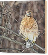 Red-shouldered Hawk Front View Square Wood Print